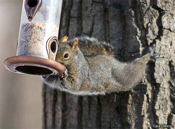 squirrel-birdfeeder